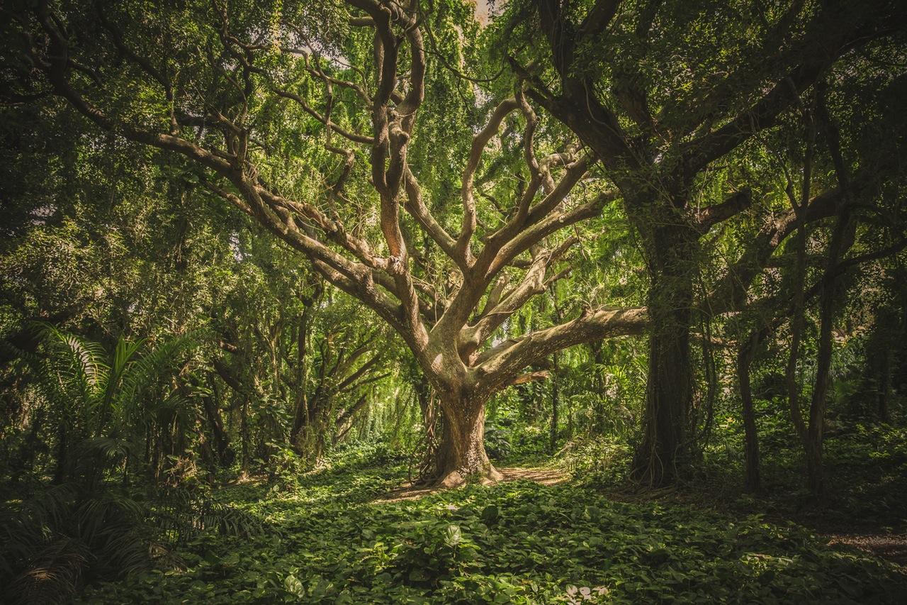 Casa sull'albero in giardino in provincia di Avellino