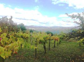 Terreno agricolo con vigneto a Montemarano
