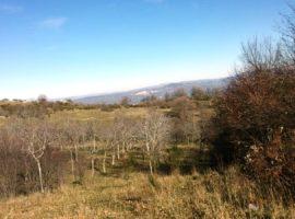 Terreno agricolo di 9.200 mq con possibilità di edificare a Montemarano