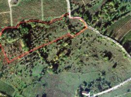 Terreno per vigneto di circa 10.959 mq a Montemarano