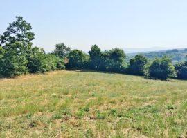 Terreno di circa 5.000 Mq a Montefalcione