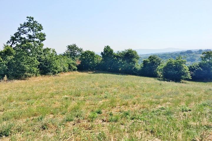 terreno agricolo di circa 5000 mq a montefalcione